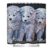 Samoyed Pups Shower Curtain