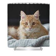 Samson_speaks Kitten Years Shower Curtain
