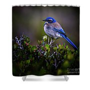 San Diego Bluebird Shower Curtain