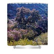 San Diego County Canyon Shower Curtain