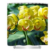 San Diego Yellow Orchids Shower Curtain
