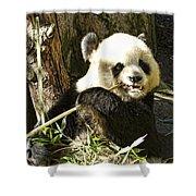 San Diego Panda Shower Curtain