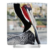 San Diego Pelican Shower Curtain