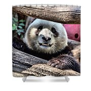 San Diego Zoo California Giant Panda Shower Curtain