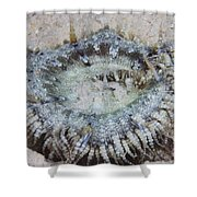 Sand Anemone, Bonaire, Caribbean Shower Curtain by Terry Moore