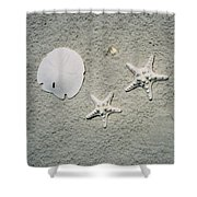 Sand Dollar And Starfish On The Beach Shower Curtain