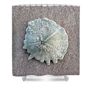 Sand Dollar Shower Curtain