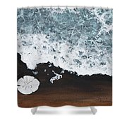 Sand Dollar Shower Curtain by Darice Machel McGuire