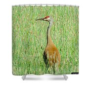 Sand Hill Crane Shower Curtain