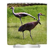 Sand Hill Crane Of 2 Shower Curtain