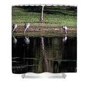 Sand Hill Cranes Dining Room Shower Curtain