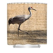 Sand Hill Cranes Shower Curtain