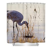 Sand Hill On The Shores Shower Curtain