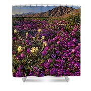 Sand Verbena Coyote Mountains Anza Borrego State Park California Shower Curtain