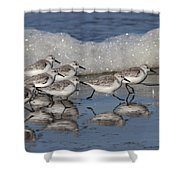 Sanderlings Shower Curtain