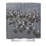 Sanderlings On The Shore Shower Curtain