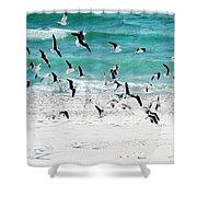 Sandestin Seagulls B Shower Curtain
