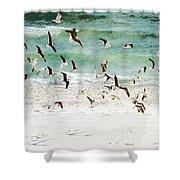 Sandestin Seagulls D Shower Curtain