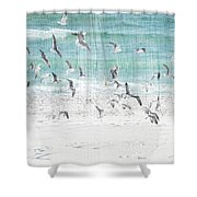 Sandestin Seagulls E Shower Curtain