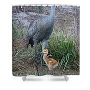 Sandhill 9 Shower Curtain
