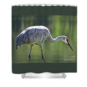Sandhill And Green Pond Shower Curtain