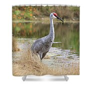 Sandhill Beauty By The Pond Shower Curtain