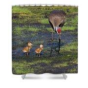 Sandhill Crane And Babies Shower Curtain