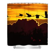 Sandhill Crane At Sunset Shower Curtain