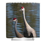 Sandhill Crane Couple By The Pond Shower Curtain