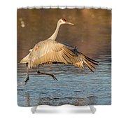 Sandhill Crane Dance Shower Curtain