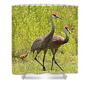 Sandhill Crane Family Shower Curtain