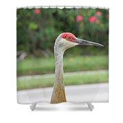 Sandhill Crane In Sarasota Shower Curtain