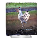Sandhill Crane Painted Shower Curtain