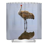 Sandhill Crane Posing Shower Curtain