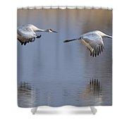 Sandhill Crane Returning Shower Curtain