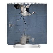 Sandhill Crane Running On Water Shower Curtain