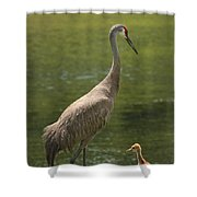 Sandhill Crane With Baby Chick Shower Curtain