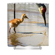 Sandhill Crane With Chick Shower Curtain