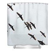 Sandhill Cranes 4 Shower Curtain