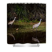 Sandhill Cranes And Chicks Shower Curtain