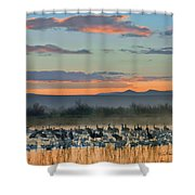 Sandhill Cranes And Snow Geese Shower Curtain
