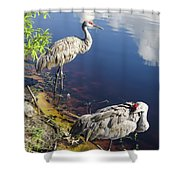 Sandhill Cranes At The Lake Shower Curtain