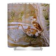 Sandhill Cranes Chicks First Bath Shower Curtain