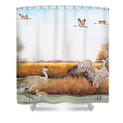 Sandhill Cranes-jp3159 Shower Curtain
