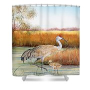 Sandhill Cranes-jp3162 Shower Curtain
