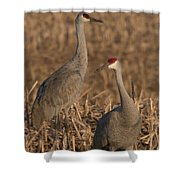 Sandhill Cranes On Watch Shower Curtain