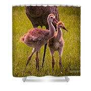 Sandhill Cranes Playing Shower Curtain