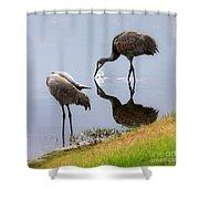 Sandhill Cranes Reflection On Pond Shower Curtain