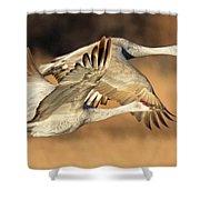 Sandhill Cranes Shower Curtain