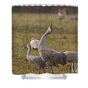 Sandhill Delight Shower Curtain